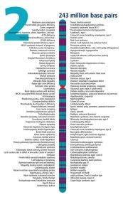 Chromosome 2