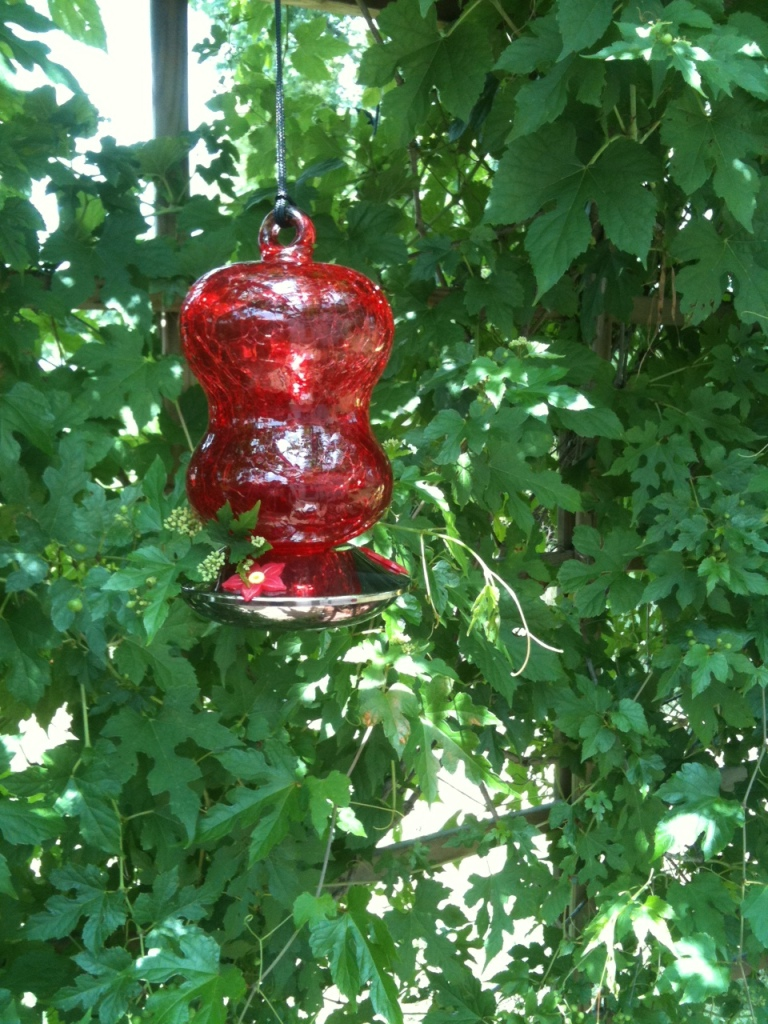 pergola, hummingbird feeder