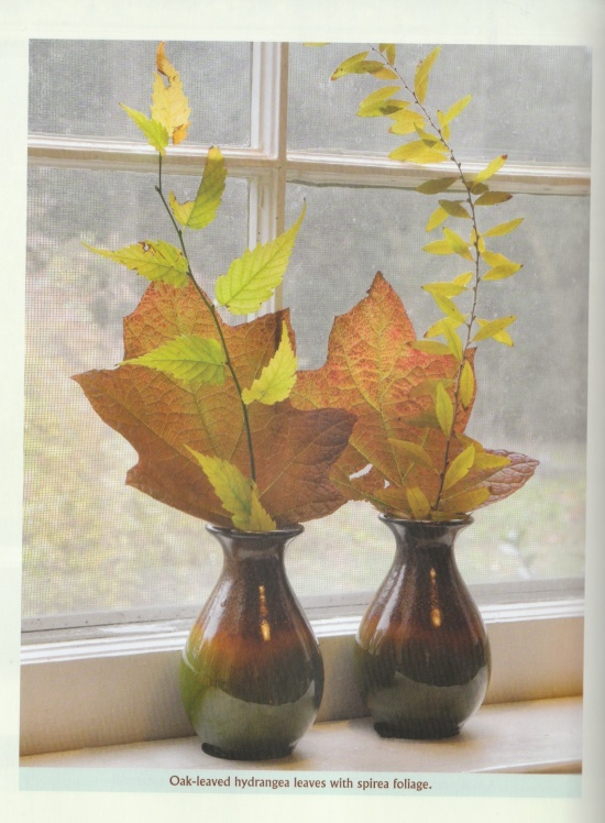 Leaves and foliage in vases on windowsill