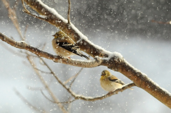 Birds on branches in snow