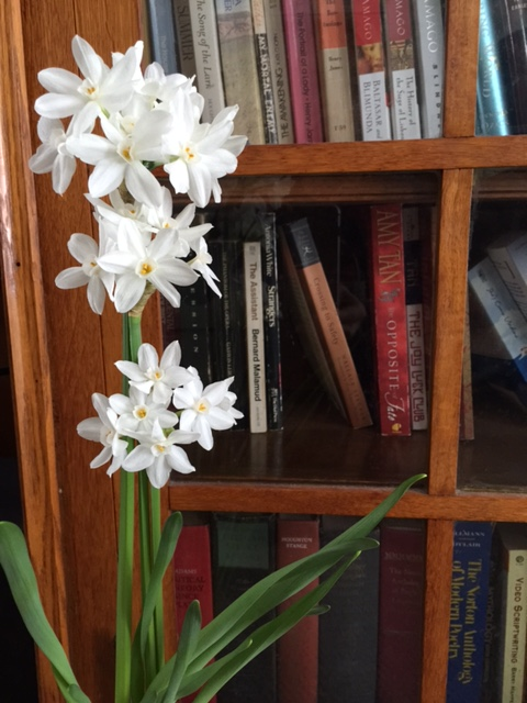 Narcissus, bookshelf