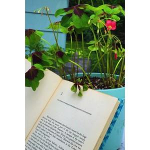Guess book & flower