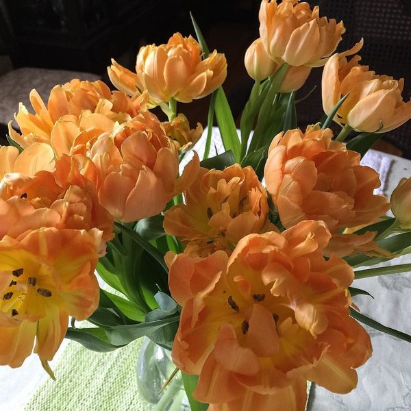 Tulips in Orange