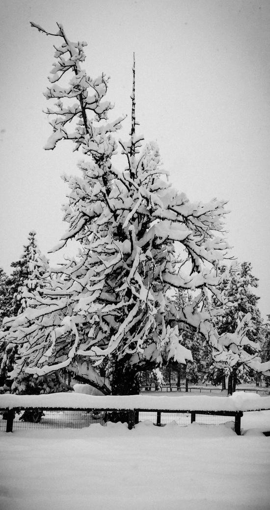 WinterSnag